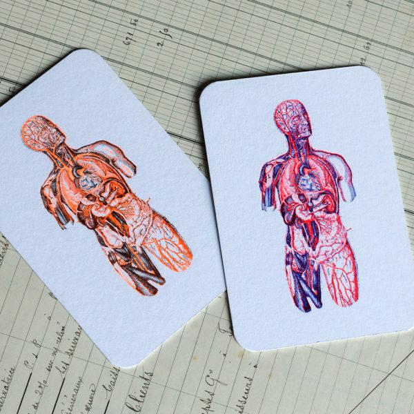 écorché - anatomie - carte - letterpress - Lyon - Super Marché noir