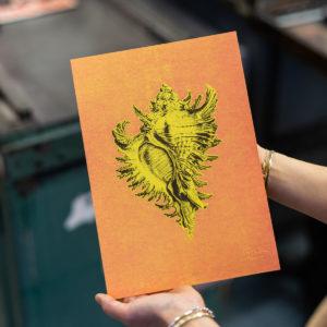 Haeckel on the beach - coquillage - histoire naturelle -affiche letterpress - Super Marché noir