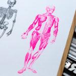 côte-à-côte - anatomie -squelette et écorchés - affiche - poster - letterpress - Lyon - Super Marché noir