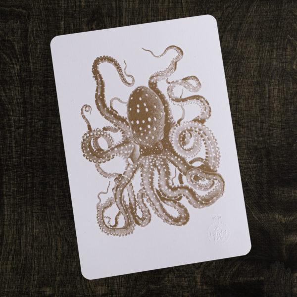 octopus - pieuvre - histoire naturelle - gravure - encyclopédie - letterpress - Super Marché noir